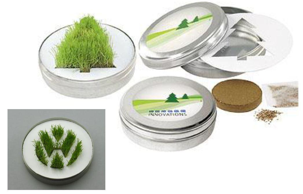 Logó formában növő fű